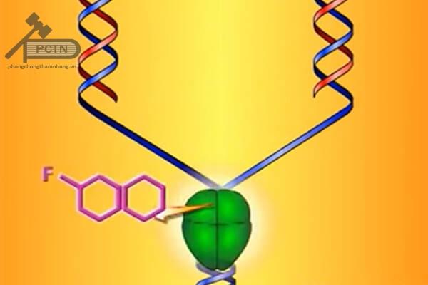 Quinolon không gắn được vào ADN gyrase của vi khuẩn