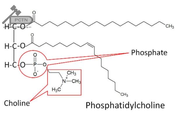 Công thức hóa học của lecithin
