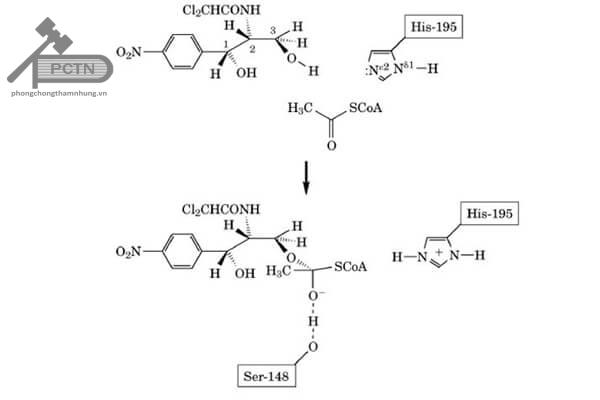 Phản ứng xúc tác của enzym CAT làm bất hoạt cloramphenicol