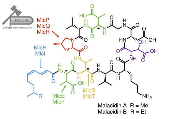 malacidin