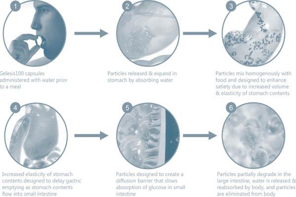 Mô hình minh họa quá trình hoạt động của Gelesis100