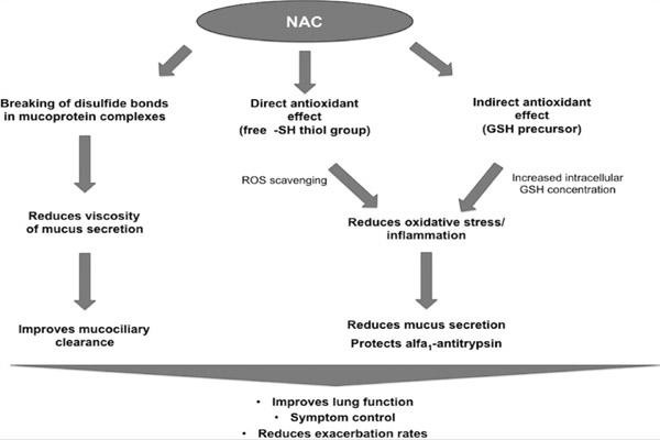 Cơ chế hoạt động của NAC