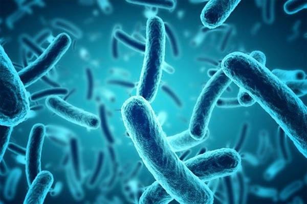 Biseptol có khả năng tiêu diệt vi khuẩn