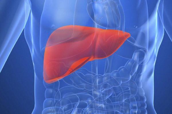 Whey protein có khả năng tác động lên gan