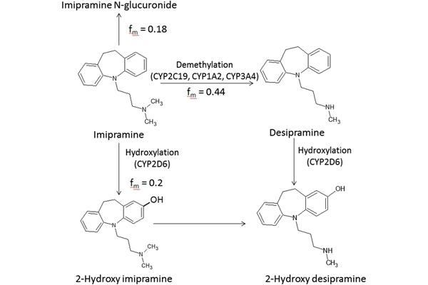 Chuyển hóa Imipenem