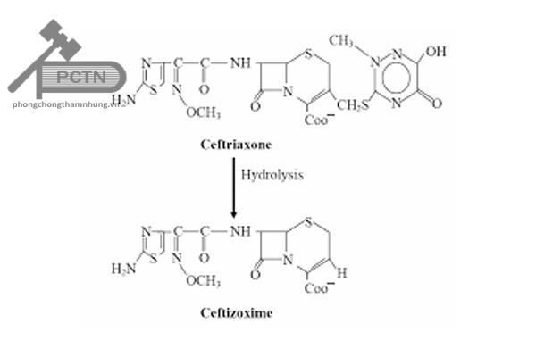 Chuyển hóa Ceftriaxone