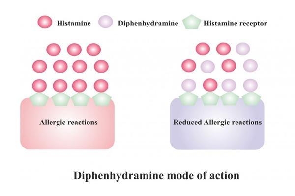 Cơ chế hoạt động của diphenhydramine thông qua việc ức chế cạnh tranh với histamine trên thụ thể H1