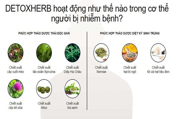 Tác dụng của DETOX HERB