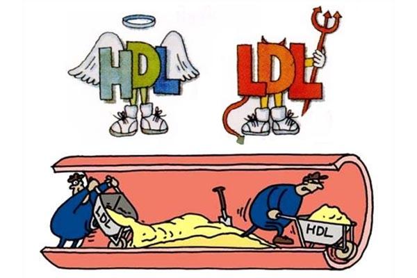 Vai trò HDL_C và LDL-C