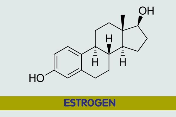 Công thức hóa học của Estrogen